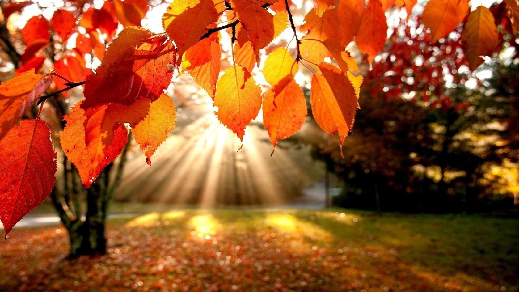 ayurveda, recetas otoño, recetas vegetarianas, recetas vata, sin colorantes, sincolorantes.com