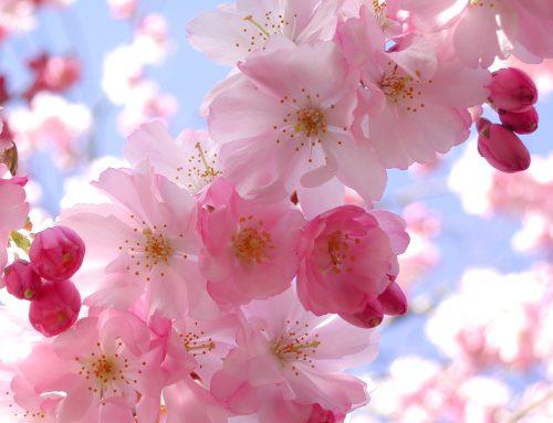 Purificación primaveral – I