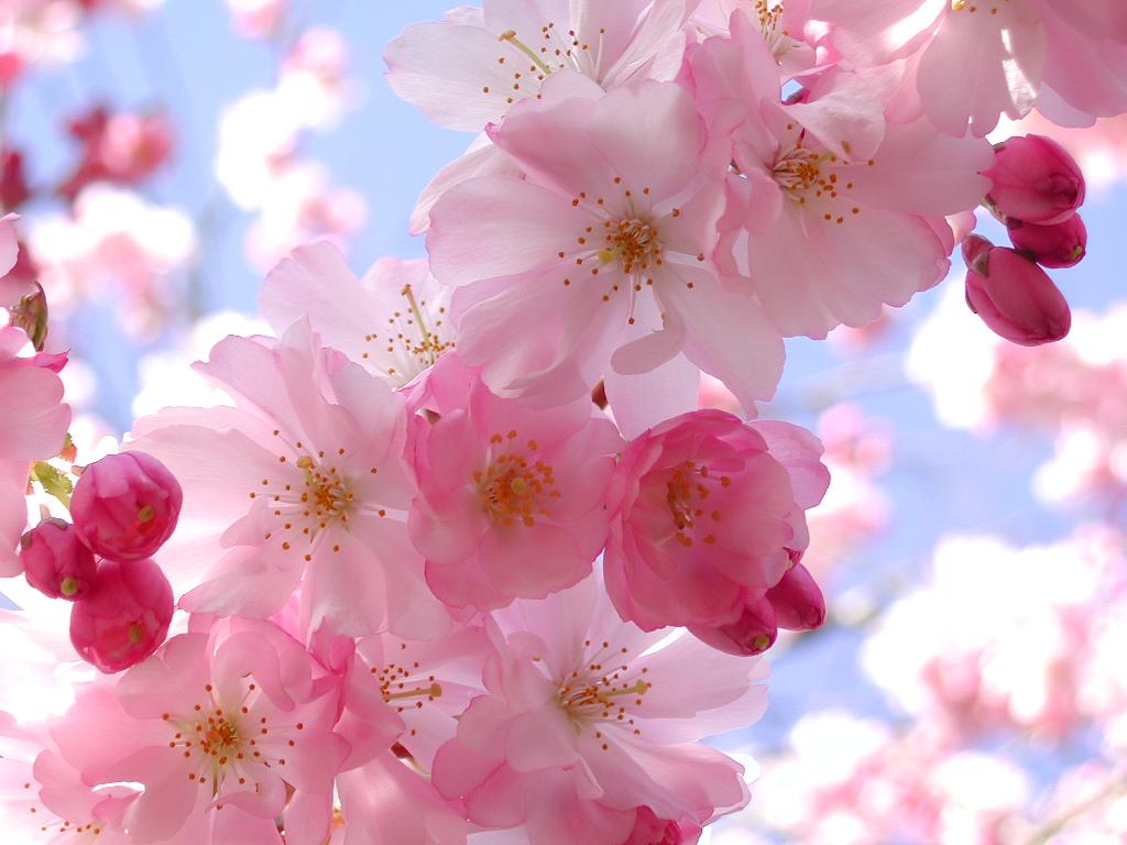 limpieza y desintoxicación primaveral