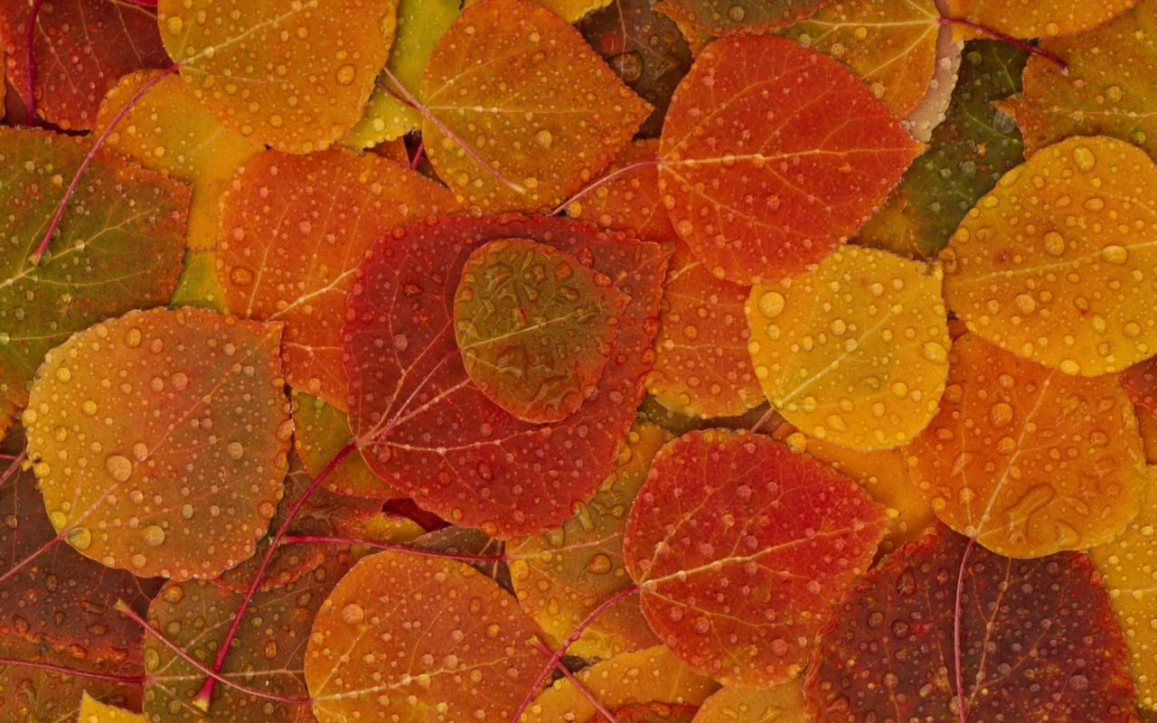 Equilibra Vata este otoño