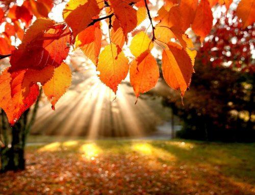 6 de Octubre: Yoga y Ayurveda para un Otoño Estable
